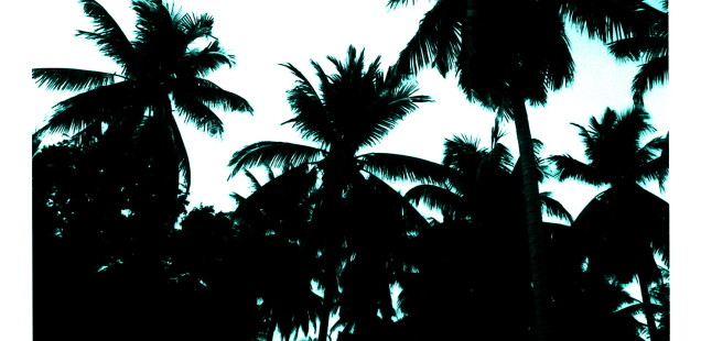 """Tropici"", un racconto di Paulina Mikol Spiechowicz"