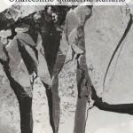 """""""Poesia contemporanea. Undicesimo quaderno italiano"""" a cura di Franco Buffoni"""
