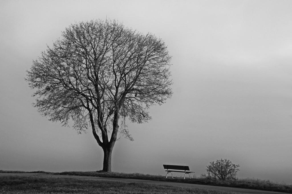tree-554391_1920