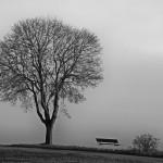 «Sono albero a novembre» di Eliana Stendardo
